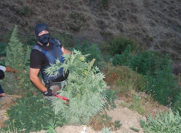 Marijuana Albanese: tra Leggende, Ammoniaca e Realtà