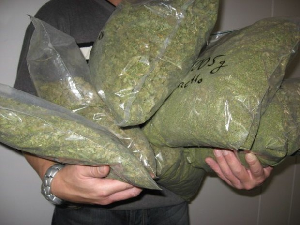marijuana albanese e ammoniaca