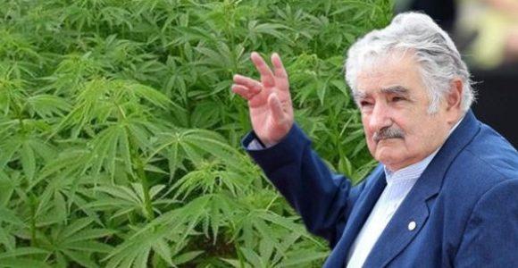 Marijuana Legale in Uruguay: il Punto della Situazione