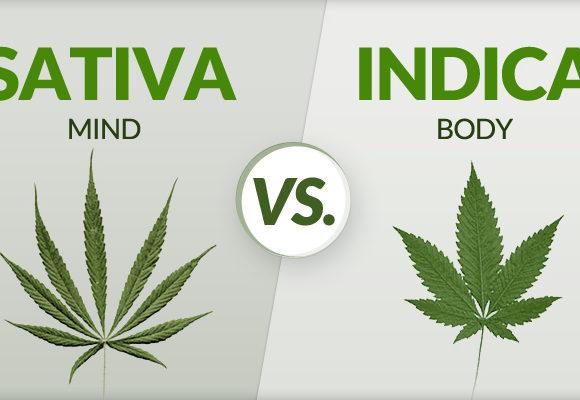 Che differenza c'è tra Marijuana Sativa e Marijuana Indica?