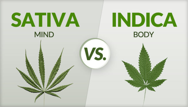differenza tra marijuana indica e marijuana sativa