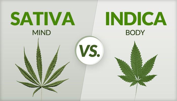 differenza tra marijuana indica e marijuana sativa