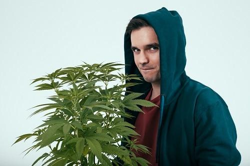 Marijuana per uso personale: Cosa dice la legge?