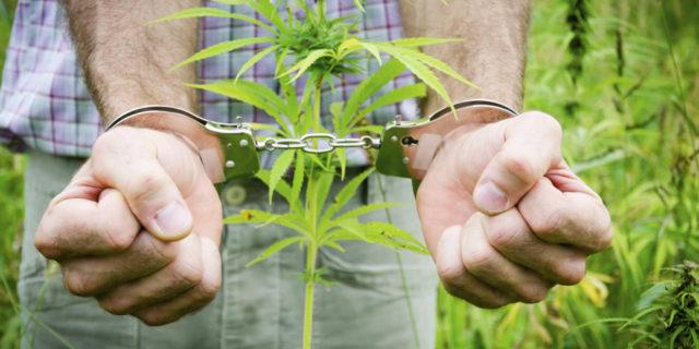 perché marijuana è illegale