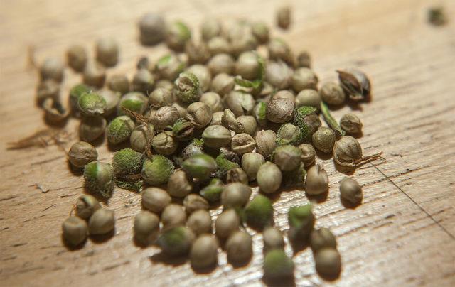 semi femminizzati di marijuana