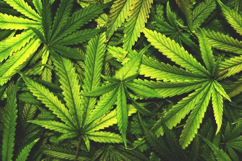Quanti modi ci sono per assumere la marijuana?