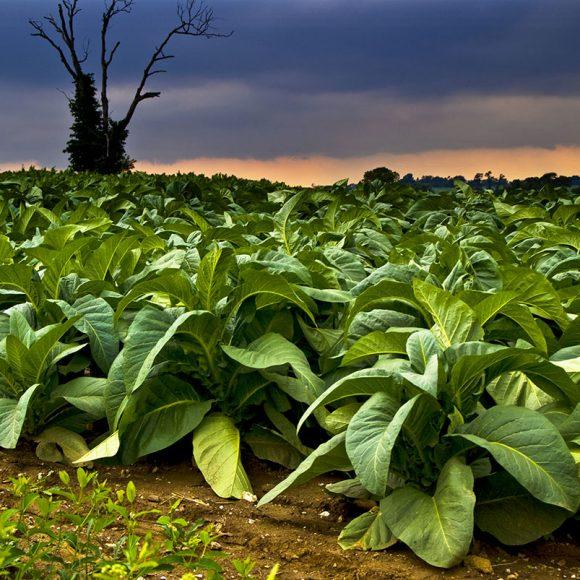 Riscaldatori di tabacco: a che punto stanno le big del tabacco