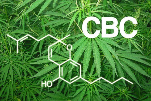cbc marijuana
