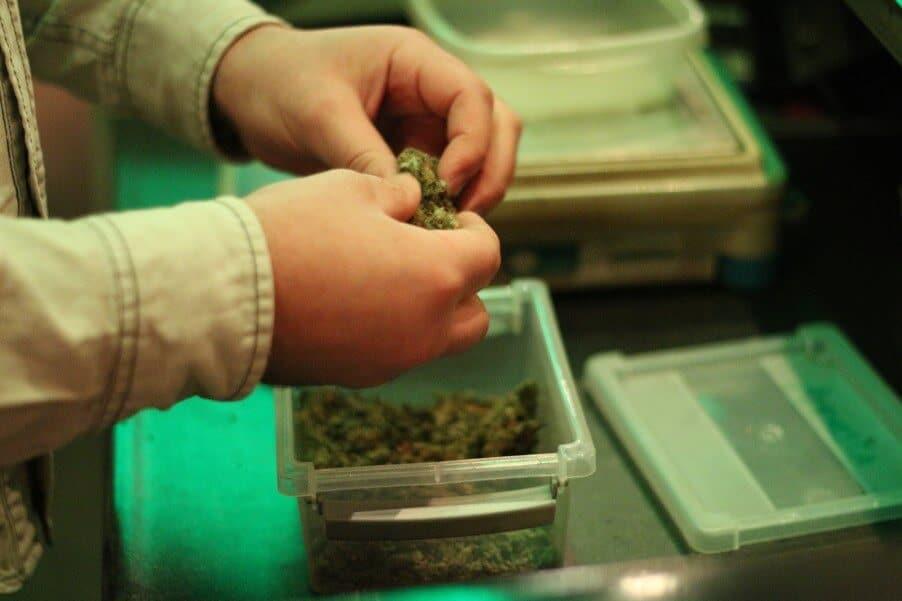 legalità cannabis nel mondo