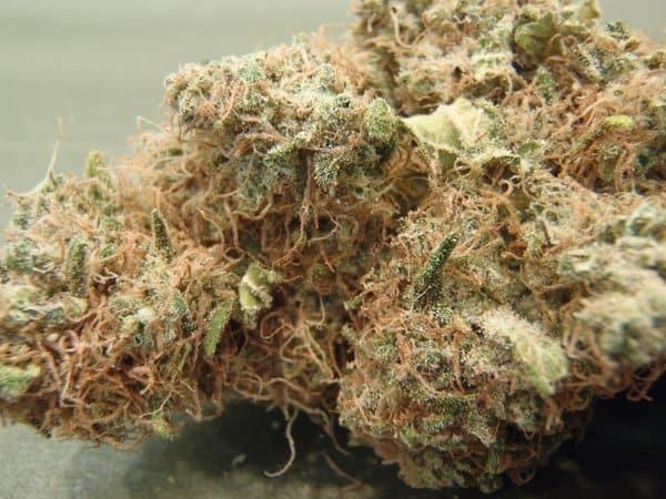 ak47 cannabis