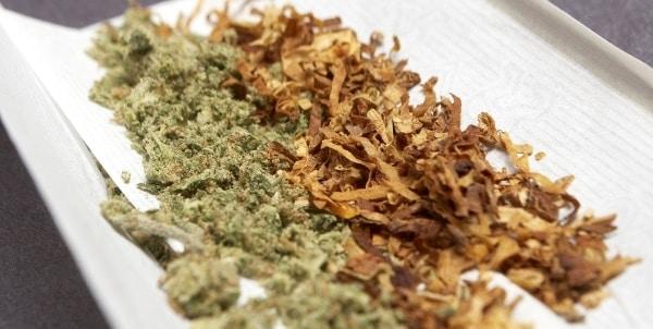 alternative al tabacco per le canne