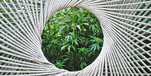 usi della cannabis sativa nell'industria tessile