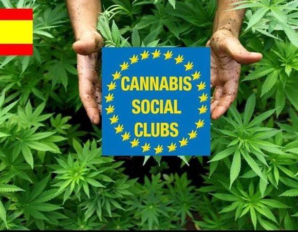 Un viaggio nei cannabis social club spagnoli, sospesi in un limbo culturale