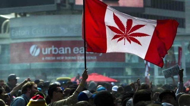 legalizzazione della marijuana in canada