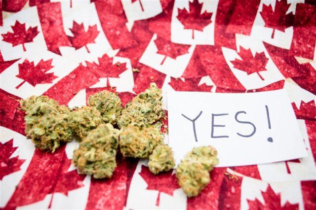 Legalizzazione della marijuana ultra light
