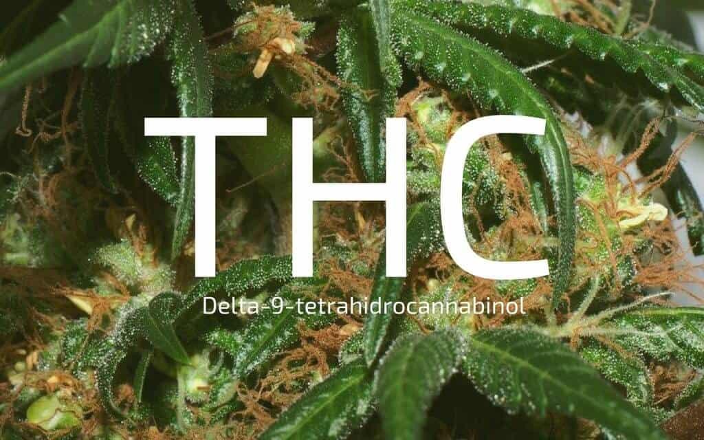 thc (delta-9-tetraidrocannabinolo)