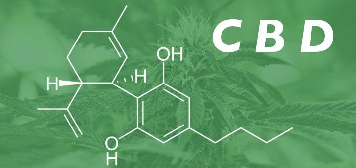 cbd (cannabidiolo)