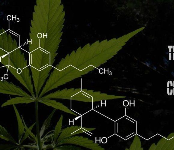 Proporzioni tra CBD e THC: regole per il giusto dosaggio