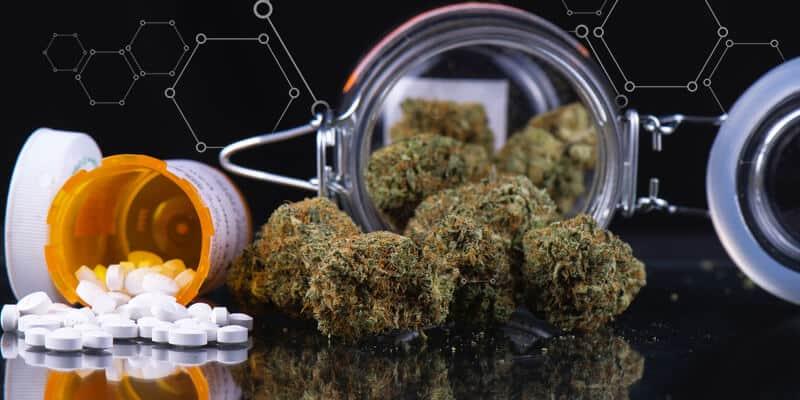 marijuana anemia falciforme