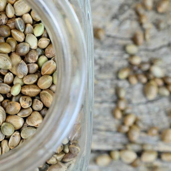 Come conservare al meglio i semi di cannabis?