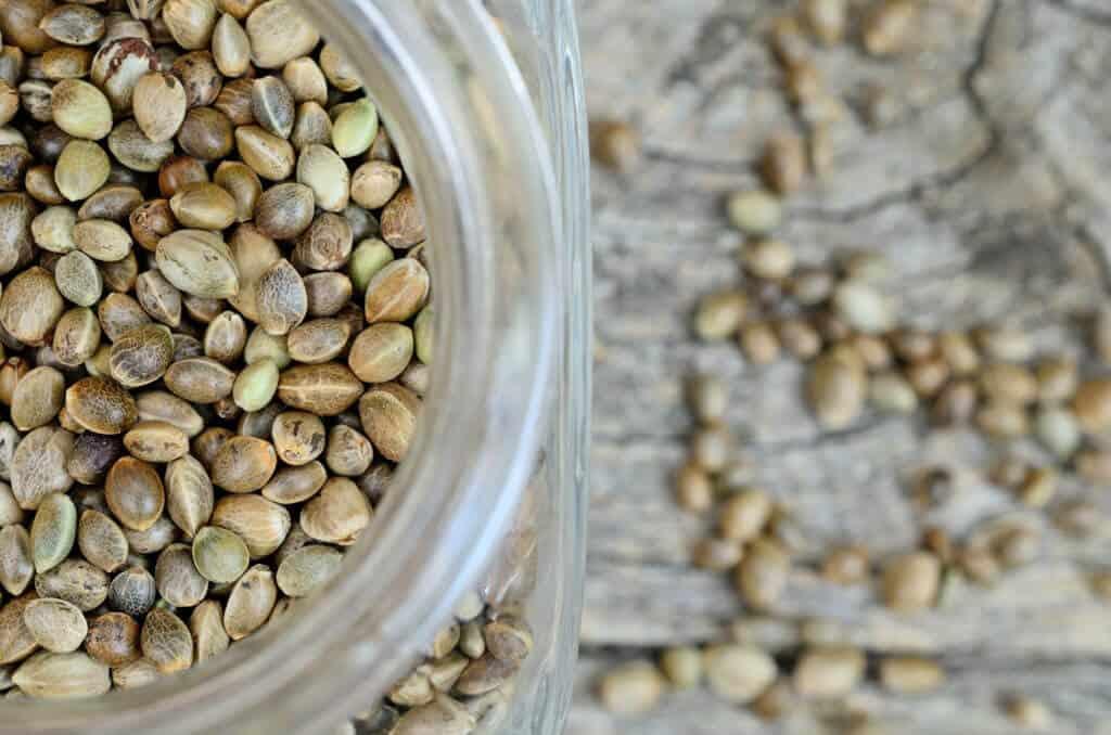 conservare semi di cannabis
