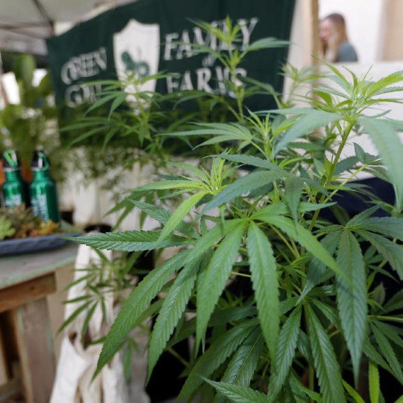 Il Michigan è il decimo Stato americano a legalizzare la cannabis