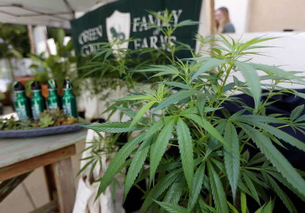 Michigan legalizzazione cannabis