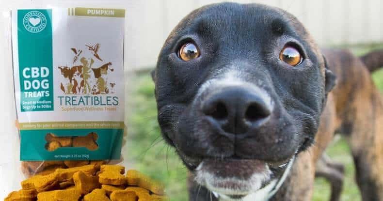 trattamento ansia cani con cbd