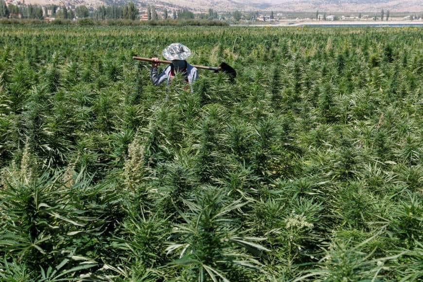 resa cannabis