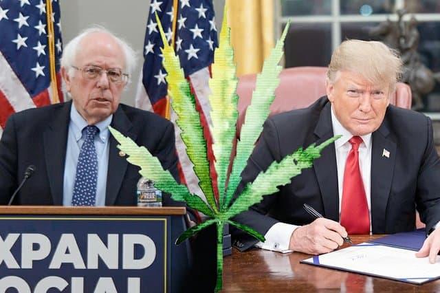 sanders trump marijuana