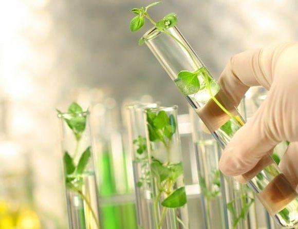 Il tabacco OGM che elimina il pericolo dipendenza