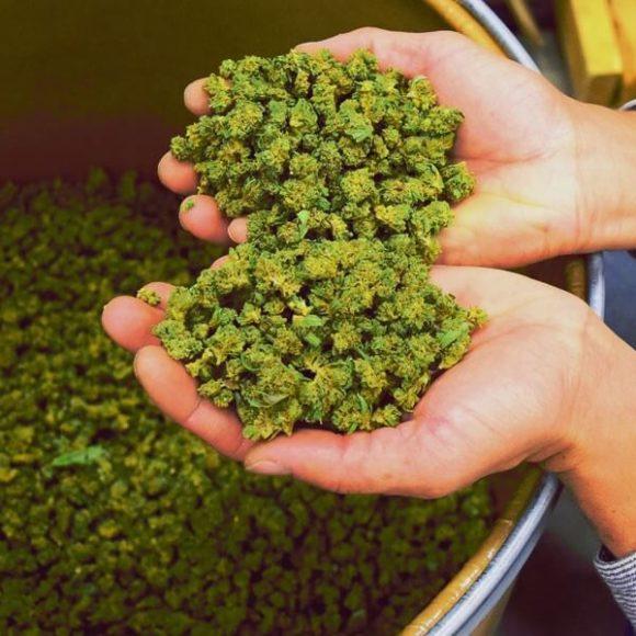 5 anni di cannabis legale in Colorado: ecco il bilancio