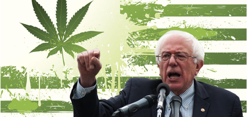 bernie sanders cannabis marijuana