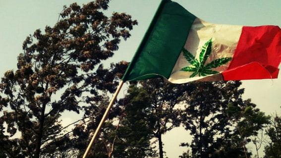 Il Messico è pronto ad abbracciare la legalizzazione della cannabis