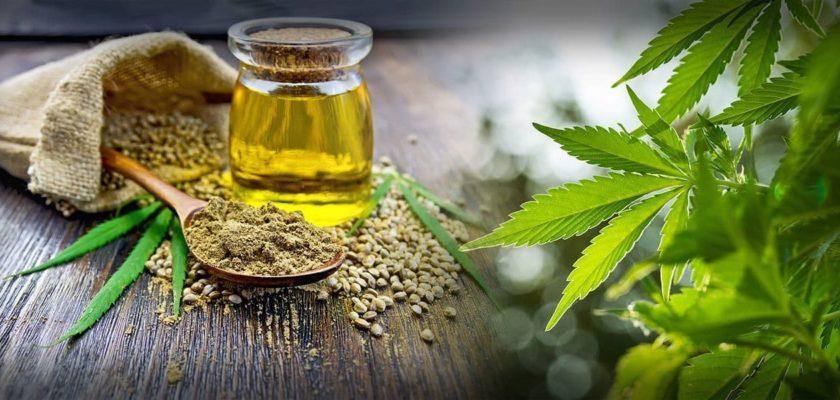olio di oliva alla cannabis